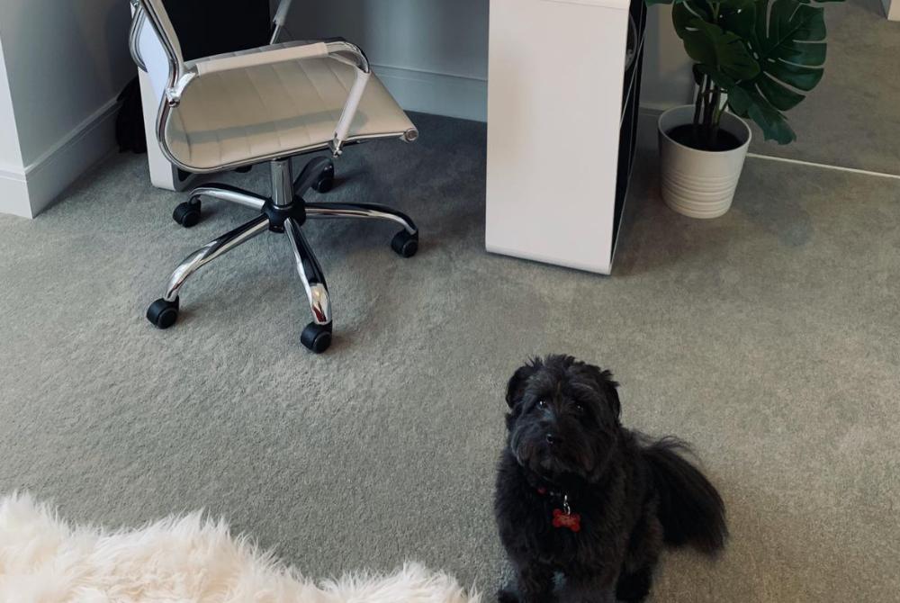Hugh's working from home buddy, his dog Nigel.